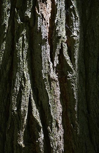 Bark Bay Record Robinia Log Common Maple Summer Gr