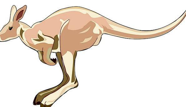 Kangaroo Jerk Creature Marsupial Mammal Outback Ho