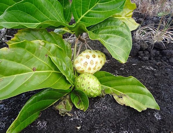 Laurel Plant Landscapes Vegetable Nature Growth De