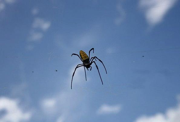Spider Bug Germ Insect Creepy Arachnid Arachnophob
