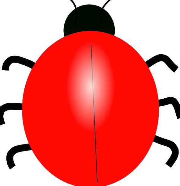 June Bug Ladybird Ladybug Beetle Free Vector Graph