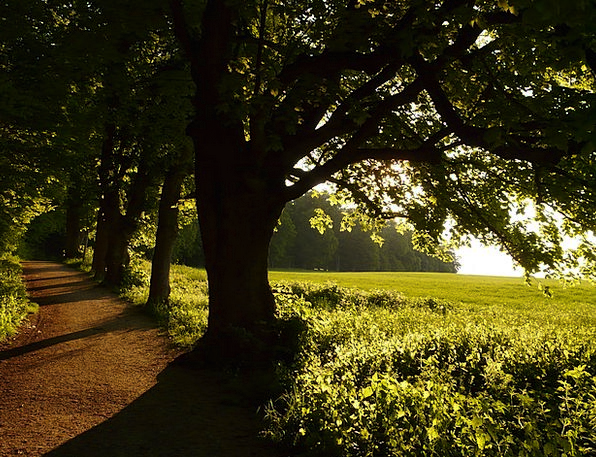 Tree Sapling Vacation Street Travel Back Light Tai
