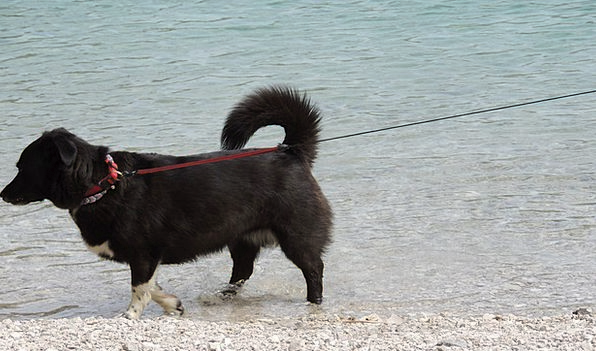 Dog Canine Dark Leash Lead Black See Understand Be