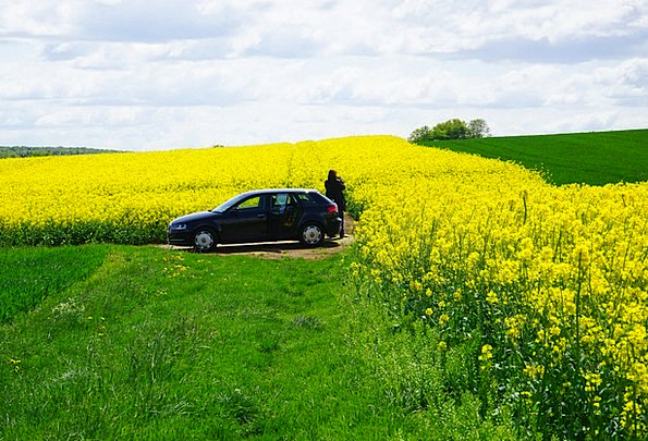 Field Of Rapeseeds Landscapes Paparazzo Nature Aut