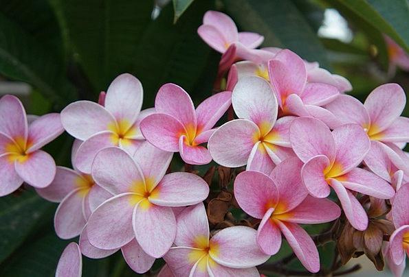 Flowers Plants Landscapes Flushed Nature Yellow Cr