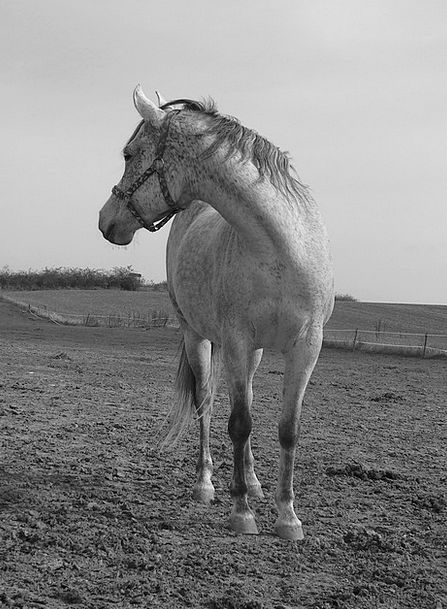 Horse Mount White Snowy Black And White B W Photog