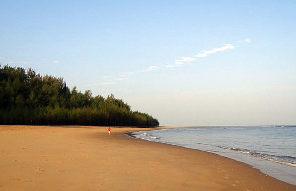 Sea Beach Golden Sand Arabian Sea Casuarina Forest
