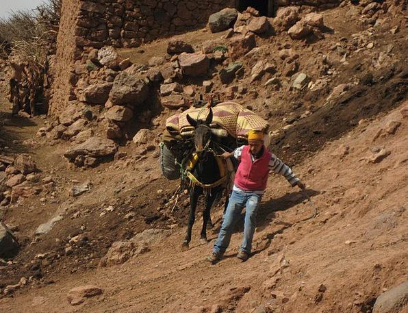 Atlas Mountains Slip Blunder Mule Muli Trekking Ma