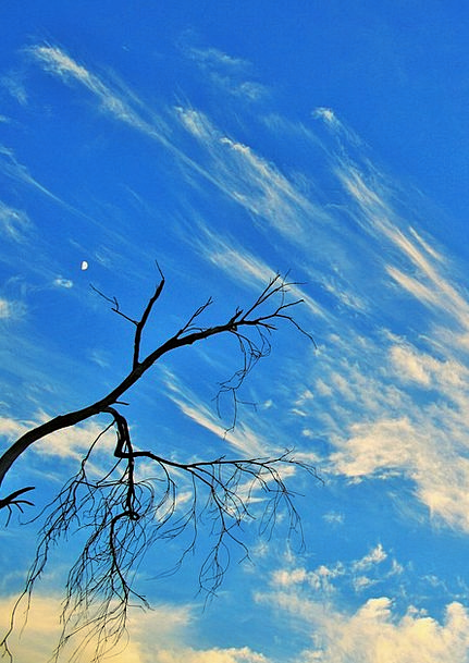 Dry Branch Sapling Dry Thirsty Tree Sky Dead Decea