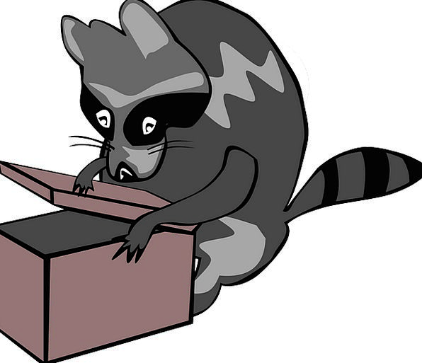 Raccoon Container Animal Physical Box Mammal Creat