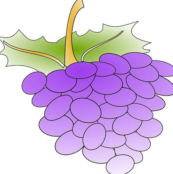Grapes Landscapes Creeper Nature Produce Crop Vine
