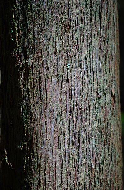 Tribe People Record Tree Heath Log Anaga Erica Arb