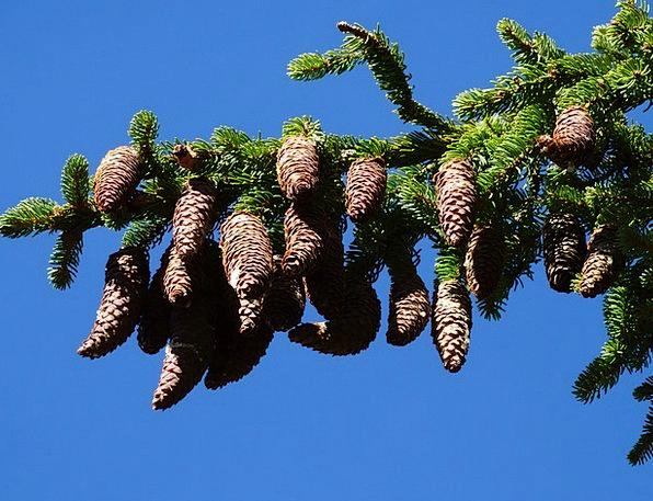 Alpine Trees Pixcove