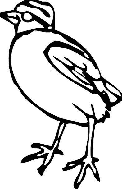 Bird Chicken Peep Peek Chick Fowl Free Vector Grap