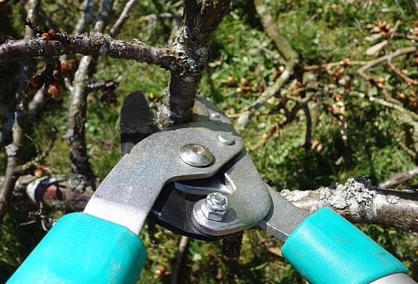 Pruning Shears Craft Fall Industry Garden Plot Aut