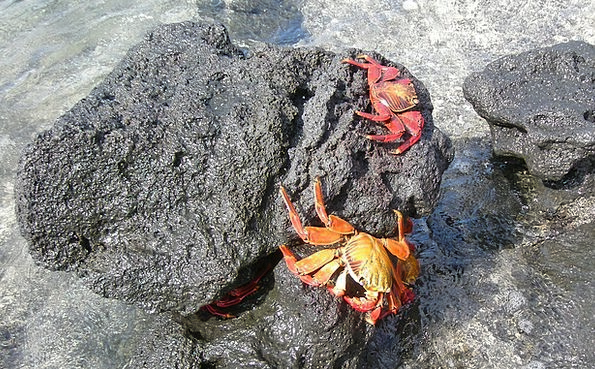 Crabs Maritime Water Aquatic Marine Rocks Pillars