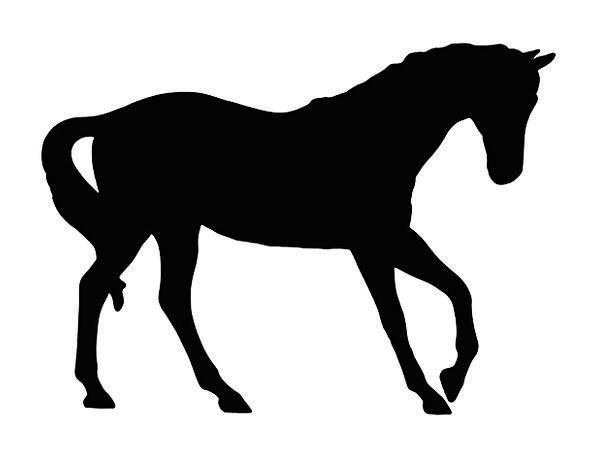 Horse Mount Dark Outline Plan Black Silhouette Bea