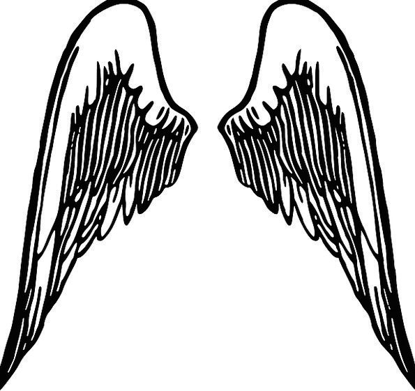 Wings Annexes Seraph Feather Quill Angel Cherub Wi