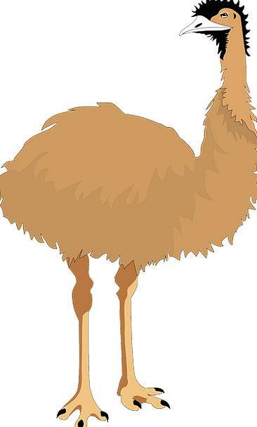 Emu Nonflying Bird Fowl Flightless Wings Annexes A