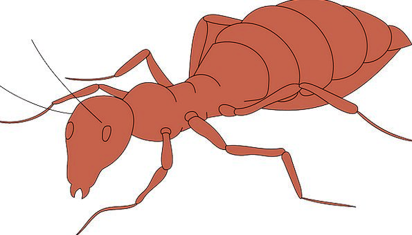 Orange Carroty Body Form Ant Segmented Insect Walk