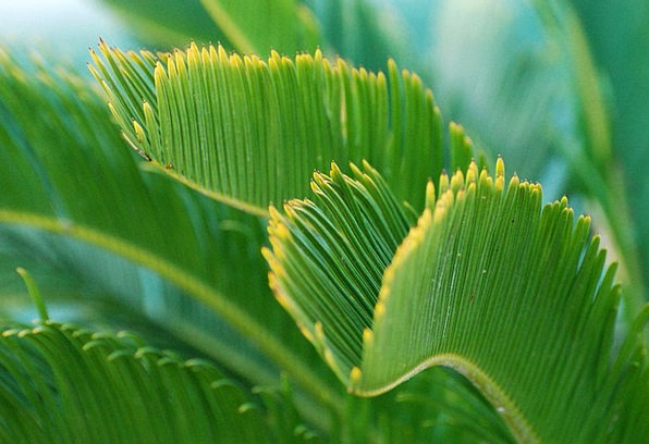 Green Lime Landscapes Vegetable Nature Palm Tree P