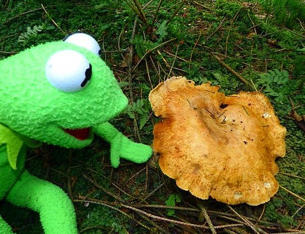 Kermit Landscapes Nature Mushroom Burgeon Frog To