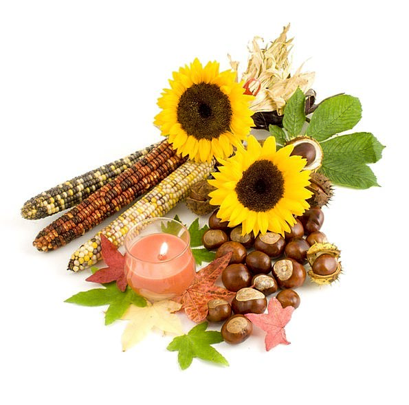 Sunflower Corn Goo Indian Candle Taper Leaves Conk