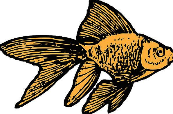 Goldfish Tank Cistern Aquarium Water Gold Fish Fre