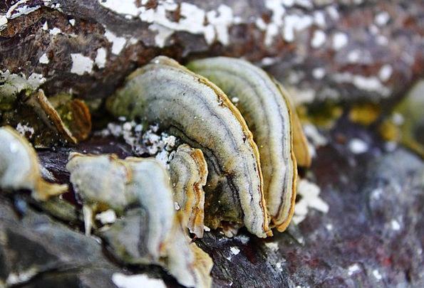 Mushroom Burgeon Landscapes Center Nature Forest W