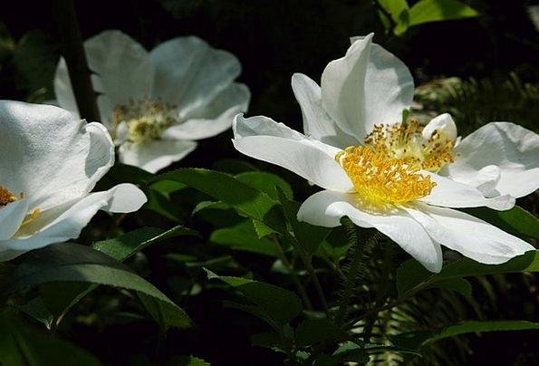 Nanxi Waterside Flower Floret Riverside