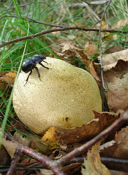 Tree Fungus Landscapes Burgeon Nature Nature Count