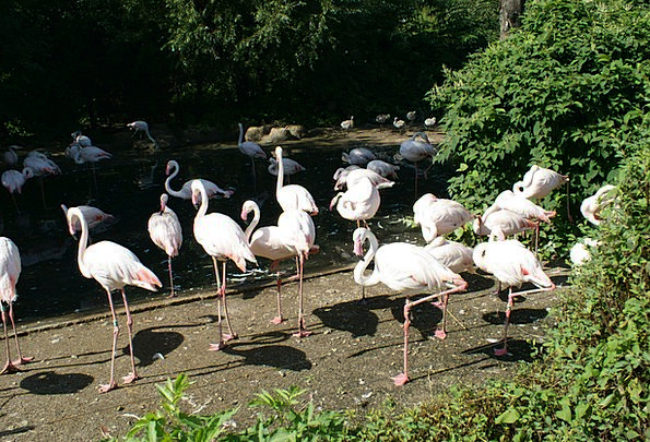 Flamingo Landscapes Countryside Nature Zoo Menager