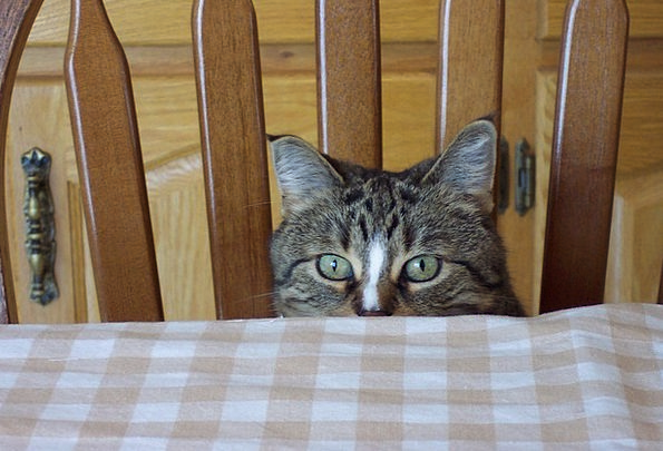 Cat Judgments Feline Catlike Eyes Tabby Peek Boo P
