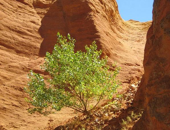 Rock Pillar Yellowish-brown Orange Carroty Ocher F