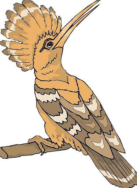 Bird Fowl Looking Observing Hoopoe Fauna Back Spin