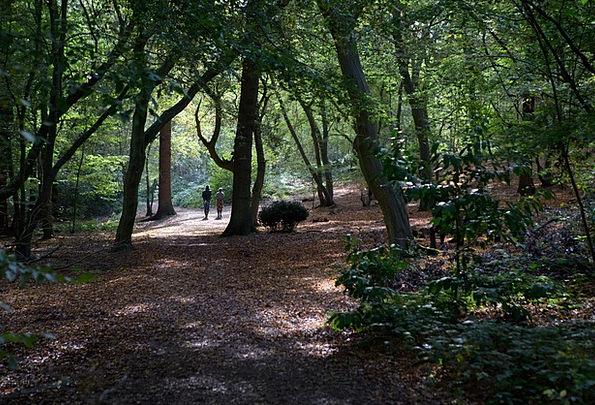 Walkers Hikers Landscapes Forest Nature Landscape