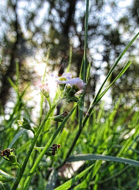 Flower Floret Landscapes Countryside Nature Green
