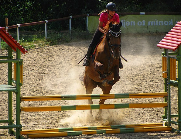 Horse Mount Jumping Hopping Horse Riding Parcours