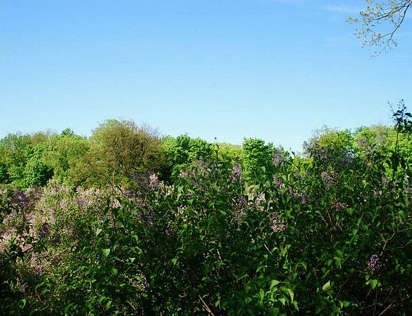 Landscape Scenery Landscapes Countryside Nature Bl