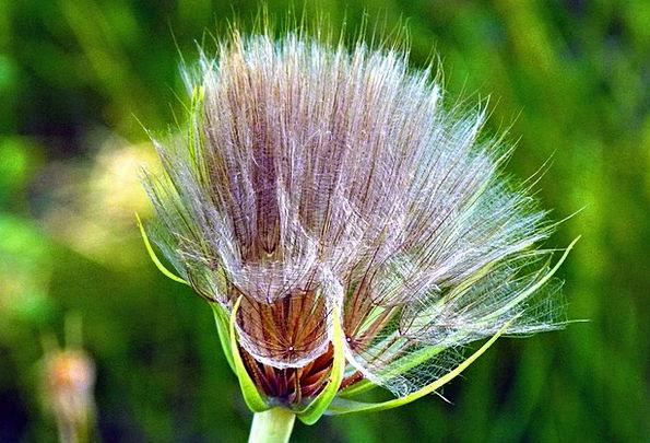 Wildflower Weed Landscapes Floret Nature Wild Plan