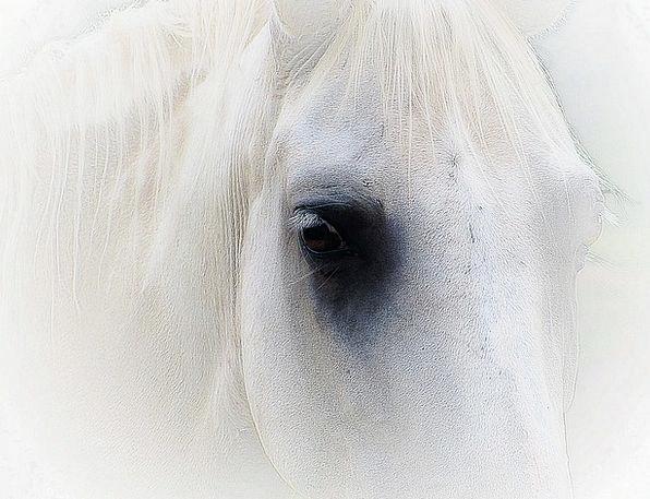 Horse Mount Expression Portrait Representation Fac