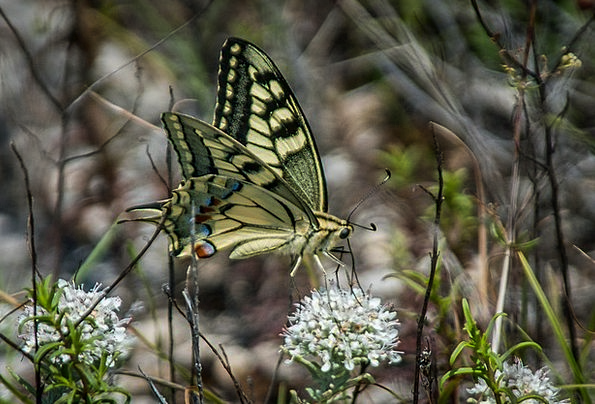 Butterfly Landscapes Merge Nature Wing Annex Dovet