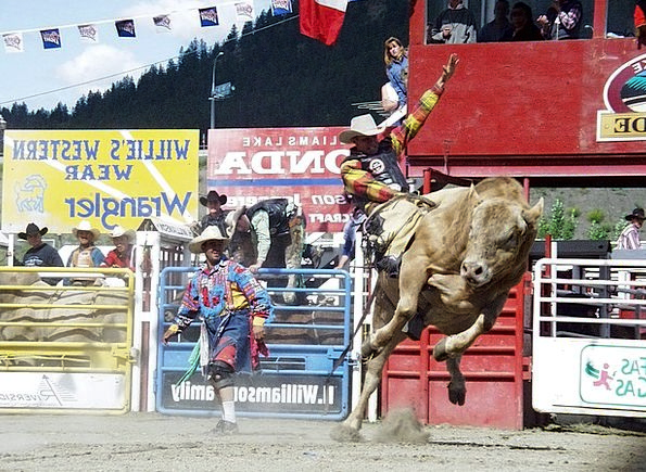 Rodeo Competition Cowboy Unreliable Bull Riding Bu
