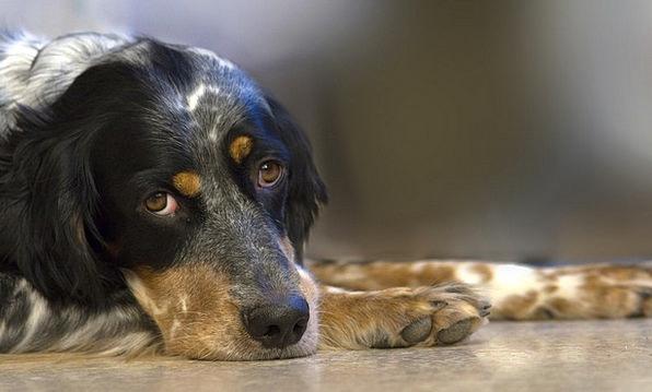 Dog Canine Domesticated Animal Physical Pet Cuddle