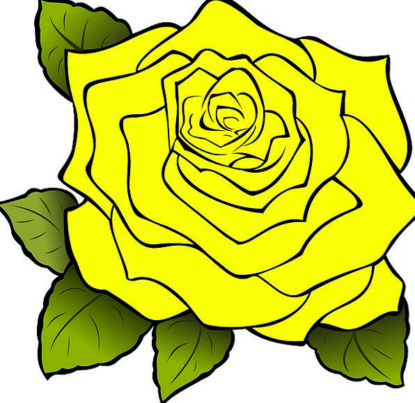 Rose Design Creamy Drawing Sketch Yellow Beautiful Isolated