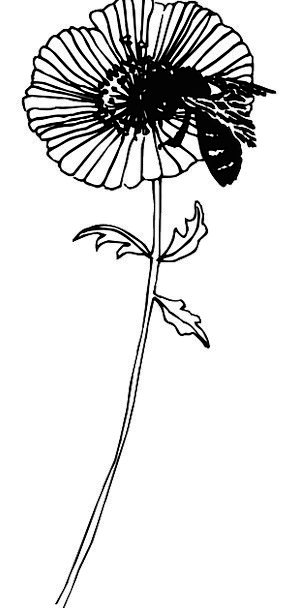 Flower Floret Landscapes Nature Plant Vegetable Be
