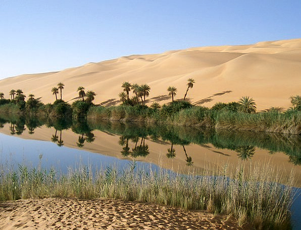 Oasis Retreat Desert Reward Libya Sahara Palm Tree