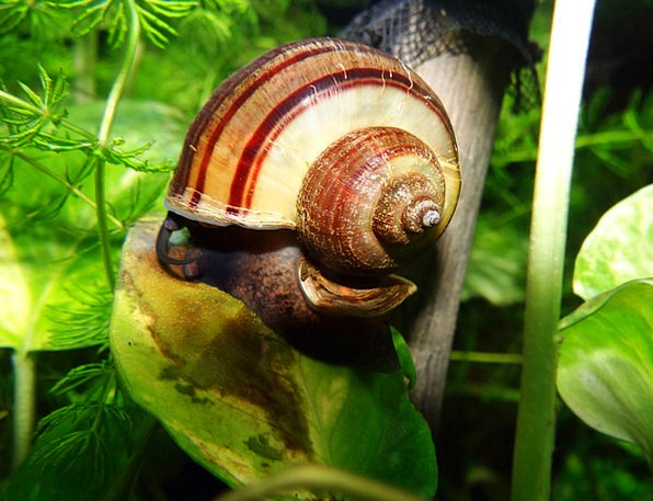 Snail Bomb Mollusc Shell Nature Macro Instruction