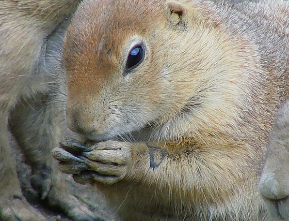 Squirrel Collector Drink Food Rodent Nager Gnaw Wo