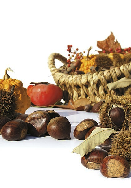 Autumn Fall Drink Ovary Food Chestnuts Anecdotes F